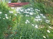 My small backyard