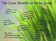 Benifits of Barley Grass