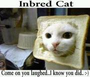 InBread Cat!!