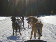 Dogsledding...Scratch that one off the bucket list.