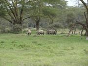 L. Nakuru-Rhinos