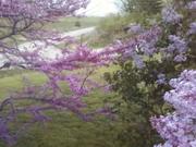 weird spring! 006