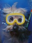 Scoobie Diver