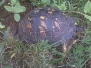 Turtle Sista 2010