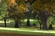 Autumn Park Oct 16th 08,