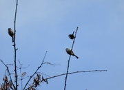 2014 Jan 19 Birdwatch