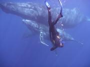 Merci les Baleines