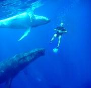 Baleines 2011