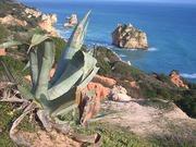 Costa Arrifes