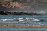 Gaviotas e mar