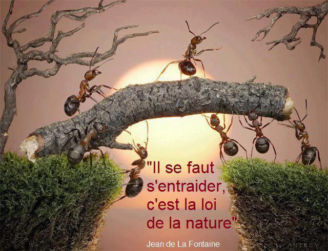 Il se faut s'entraider, c'est la loi de la Nature (Jean de la Fontaine)