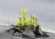 l'effort de la nature pour survivre