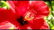 Une belle fleur...