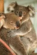cuddles OoOoO