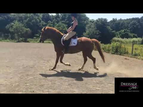 Discuss 3 Ways To Help Improve This Horse And Rider - Developing Your Eye