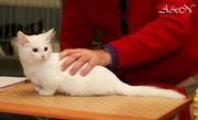 Очень красивые чужие кошки