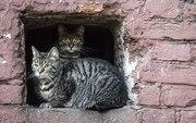 Коты дырки в стене-3