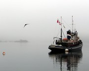 Seahorse in Monday's fog