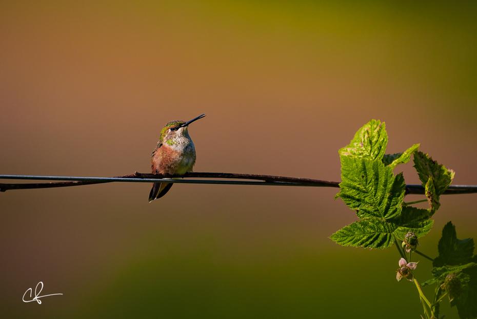 Parting beak