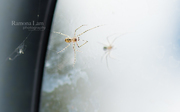 itsy bitsy spider went up my car window