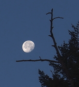 Pre Hallowe'en Moon