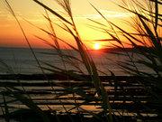 Praia das Avencas 1