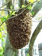 swarm close up