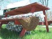 Swarm picnic table