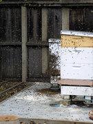 Hive Swarming