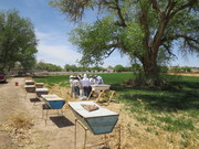 Hives at Open Space Group Bee Yard