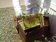 1st Hive Inspection
