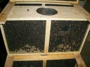 286,bee packages, #bees, #queen, #queens, #bee hives, #swarm of bees, #swarm