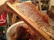 Honey harvest 2014