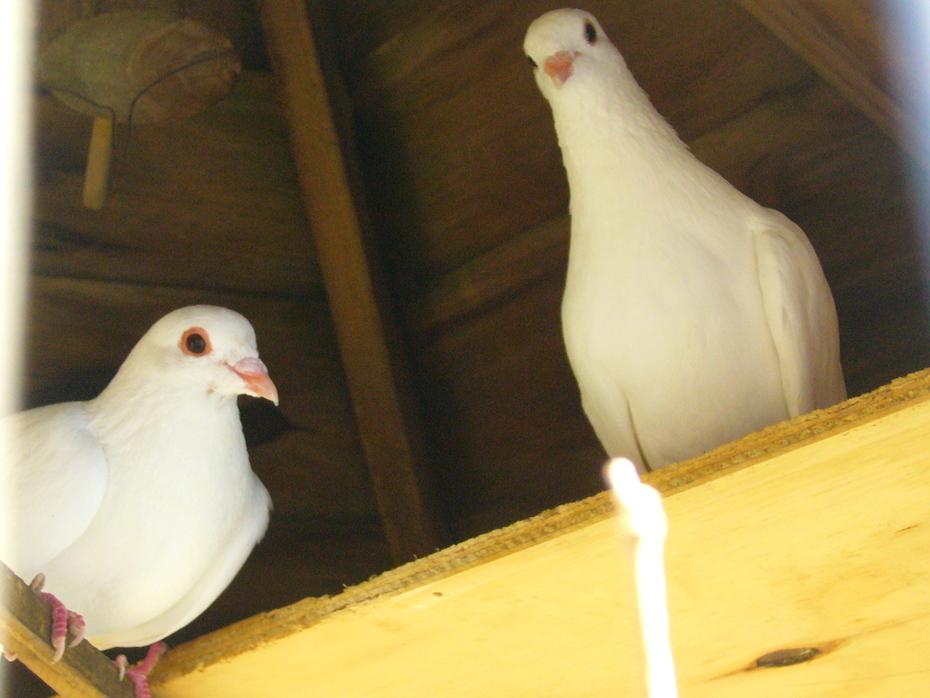 "My New babies- ""Saphira & 'Sabrae' P1040460"