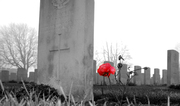 caberet-rouge-rose-headstones-red-bw