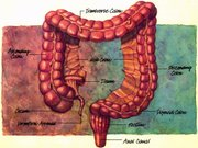 TOPIC ~ Cleansing + Detox + Colon Therapy