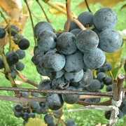 Finger Lakes Wine Group