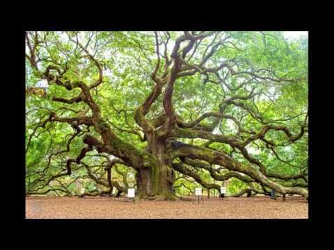 Channeling Music - Family Of Trees - Wisdom And Peace