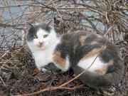 19th Ward Community Cats
