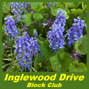 Inglewood Drive Block Club