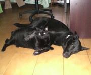 Singles-con-Mascotas