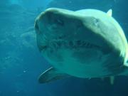 Egypt Divers