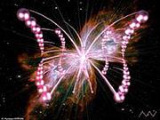 Les Ailes de Papillons