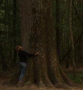 Nos amis les arbres