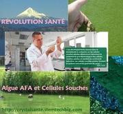 La nutrition par les Algues