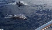 "Projet ""Nage avec les dauphins en mer"""