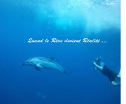 Nager avec les dauphins en pleine mer ! Lorsque le rêve devient réel...