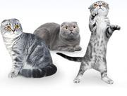 Первые шаги в мире кошек