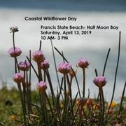 Coastal Wildflower Day Festival 2019