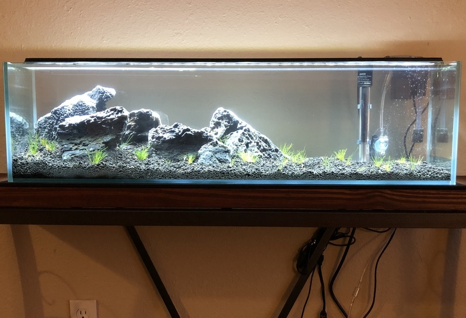 New Aquarium Stand and Plants